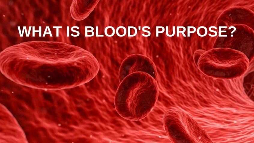 What Is The Purpose Of Blood